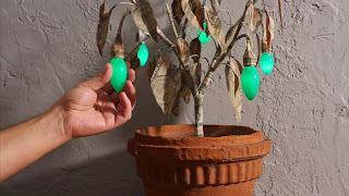 fresh guacamole-jalapeno plant