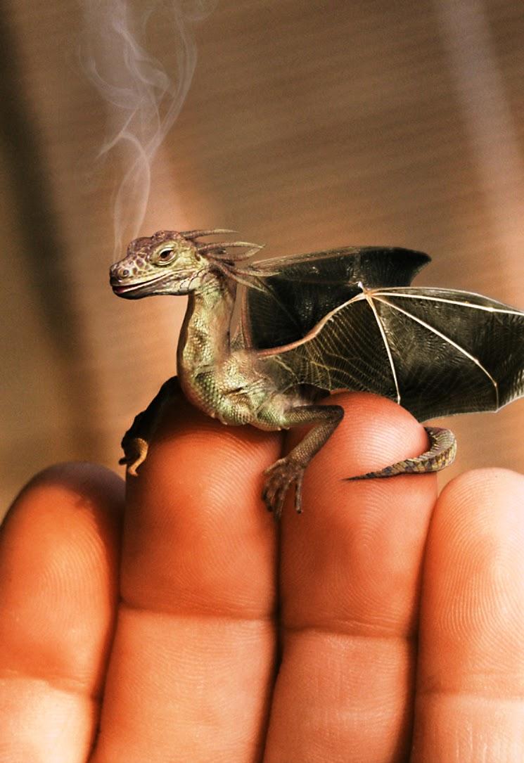 Dragon S Crown Gets New Character Art Screens Tarot: History Of World: HISTORY OF DRAGONs