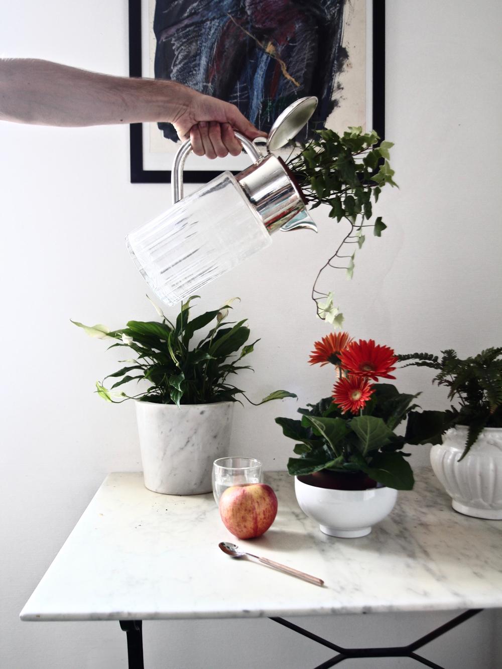 comment purifier une maison avec des plantes stylnoxe blog mode homme lifestyle voyages. Black Bedroom Furniture Sets. Home Design Ideas