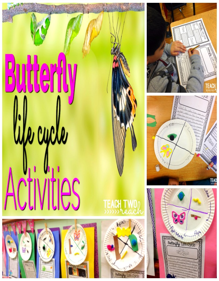 Butterfly Life Cycle Fun Teach Two Reach 2nd Grade Happenings