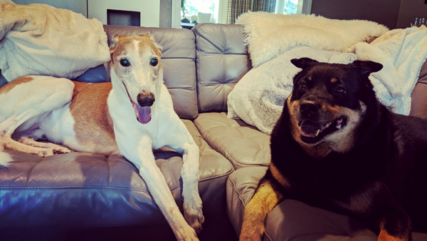 image of Dudley the Greyhound and Zelda the Black and Tan Mutt sitting on the couch beside each other, grinning