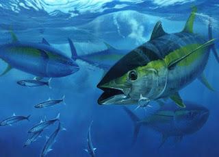 Benefits of Tuna Fish For Health