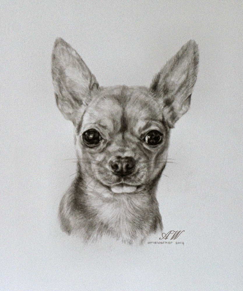 It is an image of Sassy Drawing Of Chihuahua