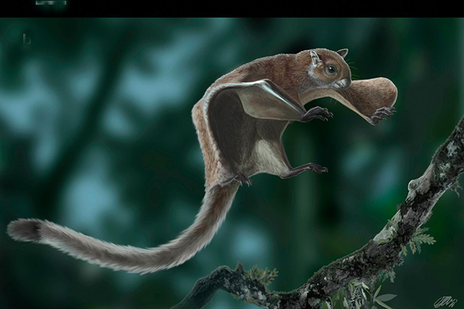 Penelitian Oldest Skeleton of a Fossil Flying Squirrel Casts New Light on the Phylogeny of the Group