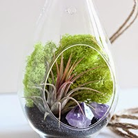 Hanging terrarium - Bird and Feather