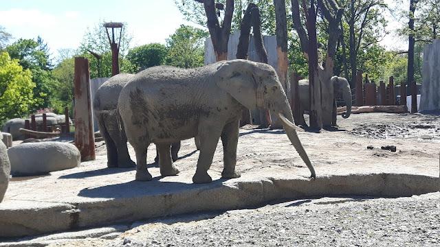 neuee Elefantengehege mit Storchennest im Zoo Basel