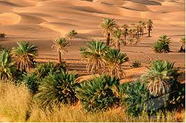 bioma padang pasir