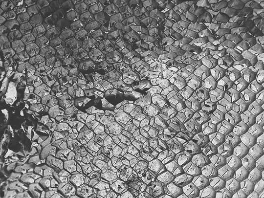 black and white photography, abstract, contemporary,modern, Sam Freek, honeycomb, urban,