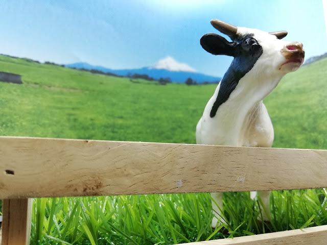 pemandangan ladang lembu di new zealand