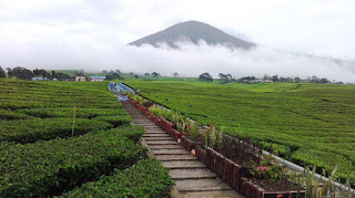 Jalur Pendakian Gunung Dempo Paling Sering Di Lewati Pendaki Profesional