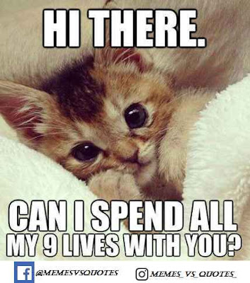 Spend 9 lives with you