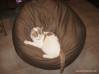 The cat Alex blending nicely with the new brown beanbag