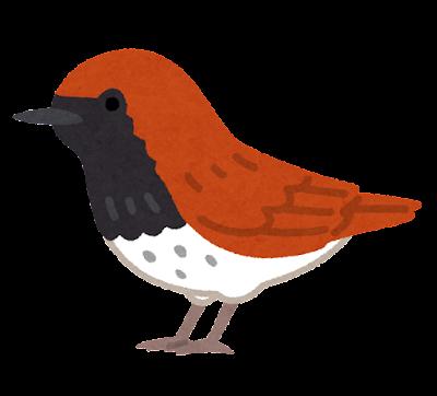 アカヒゲのイラスト(鳥)