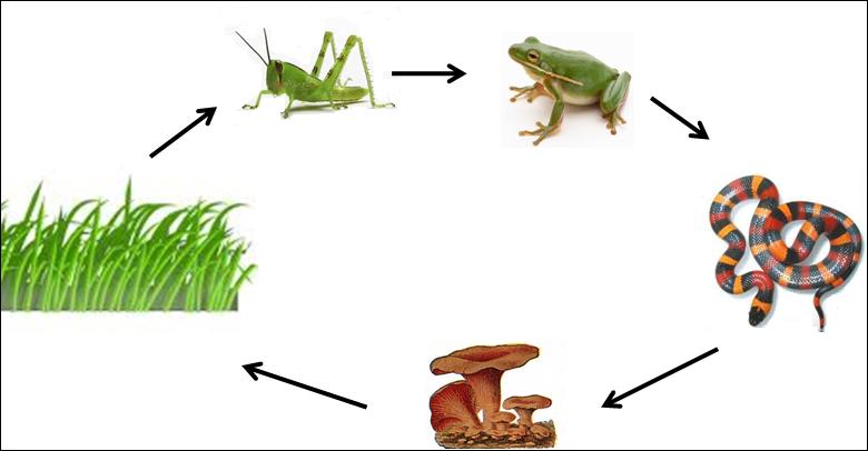 ekosistem rantai makanan dan jaring