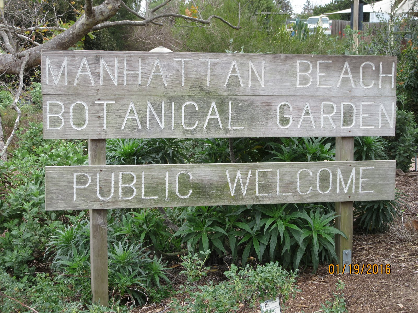 Edensouthwest - Manhattan beach botanical garden ...