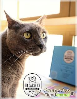 Gatera Rumbo Dr. Catsby Comedero Tiendanimal