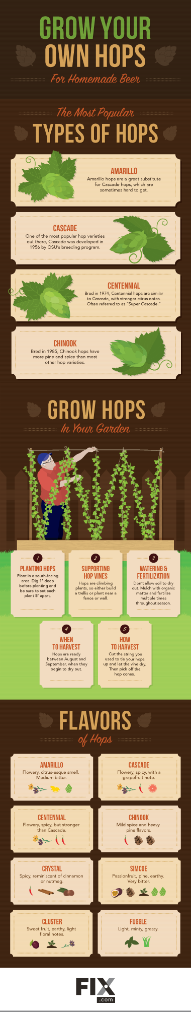 Grow Your Own Hops For Homemade Beer #infographic