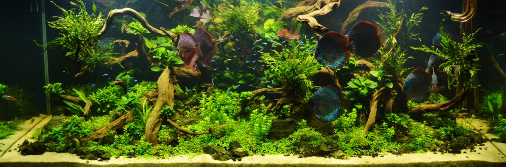 Popular plants for your discus tank.