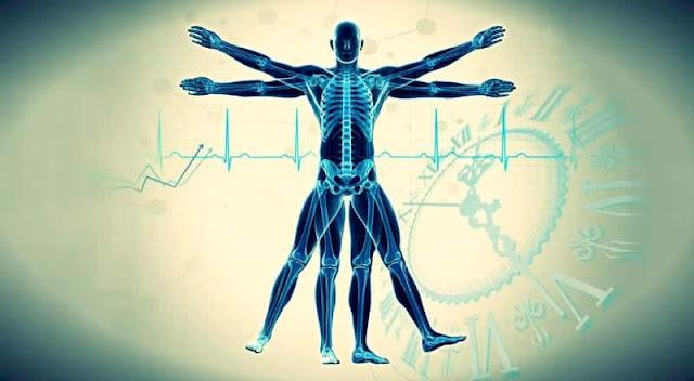 vücudumuzun-24-saat-içindeki-çalışma-prensibi