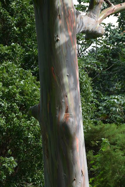Anadale Falls Grenada tree