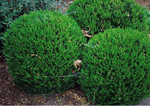 Year Round Plants For Landscaping Photos