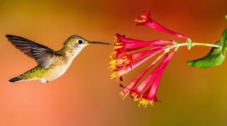 Kisah Inspirasi dan Motivasi Fabel Motivasi - Ming Ming si Kolibri Petualang Terlengkap Terbaru