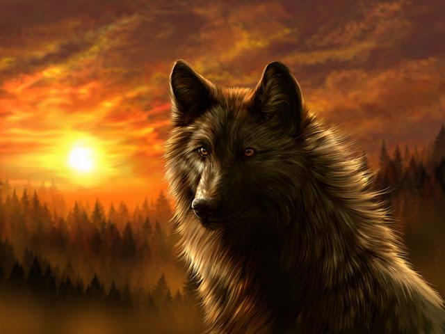 Dark Wolf Wallpaper - Best HD Wallpapers