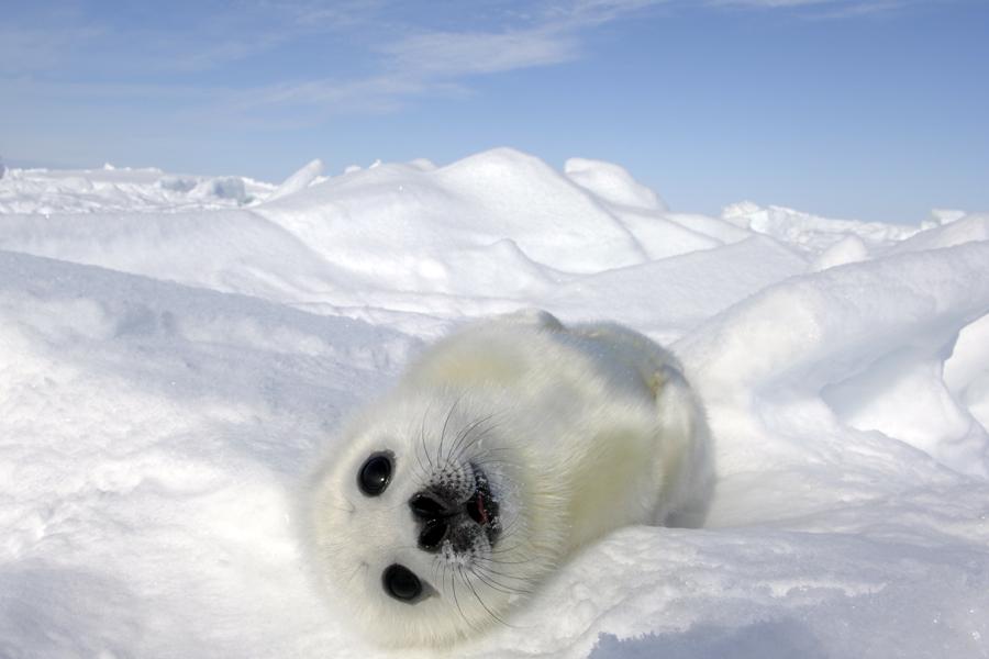 động vật nô đùa trong tuyết.12