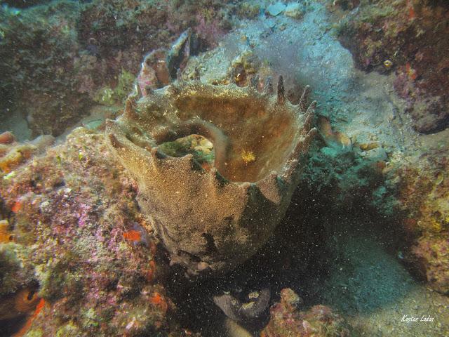 Υποβρυχια φωτογραφια Κώστας Λαδάς