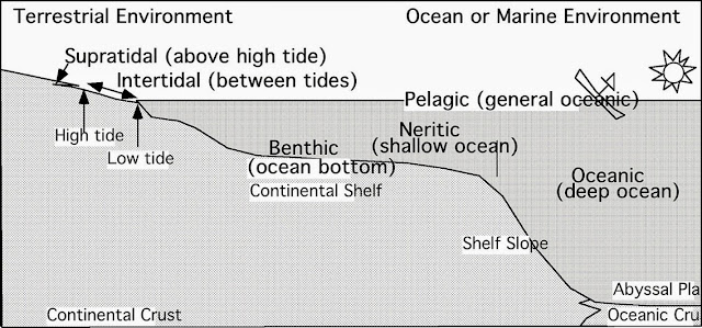 Fossils and Their Environments