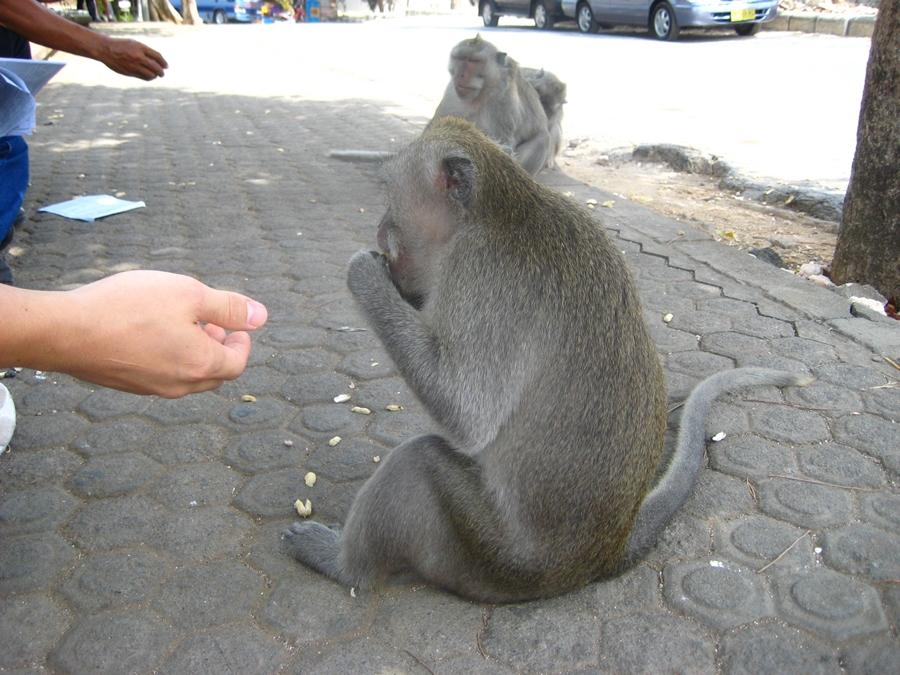 먹이를 받아먹는 원숭이