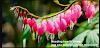 Daftar 10 Bunga Terindah Tapi Aneh