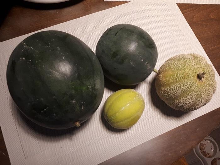 Vesimeloni Cantaloupemeloni
