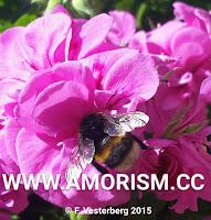 Image Bumblebee
