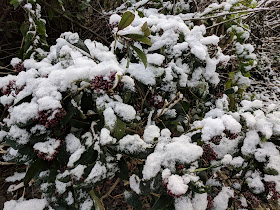 winter proofing garden