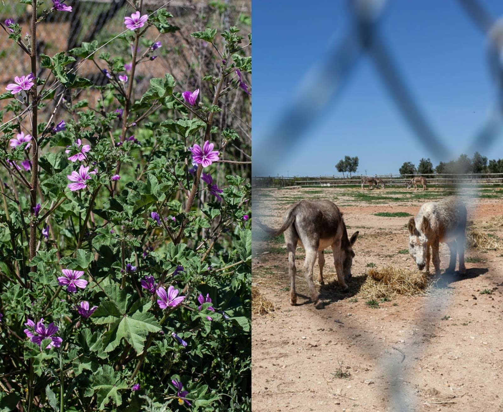 Donkey rescue shelter in Andalucia