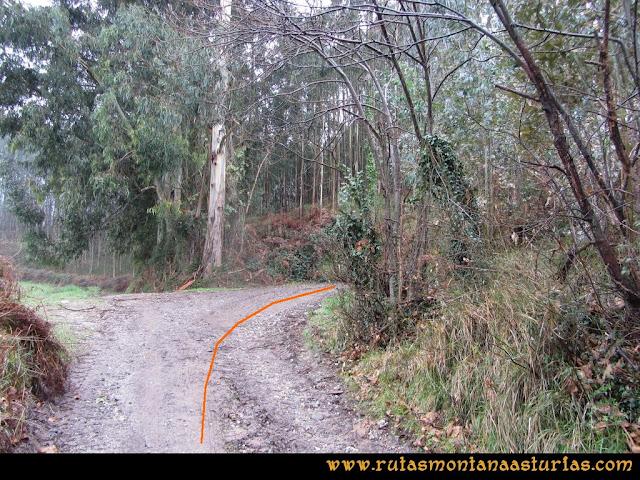 Prado Marqués: Pista entre eucaliptos.