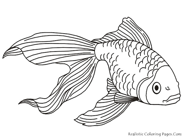 Coloring Pages Tropical Fish  Coloring Pages  Pictures  Imagixs