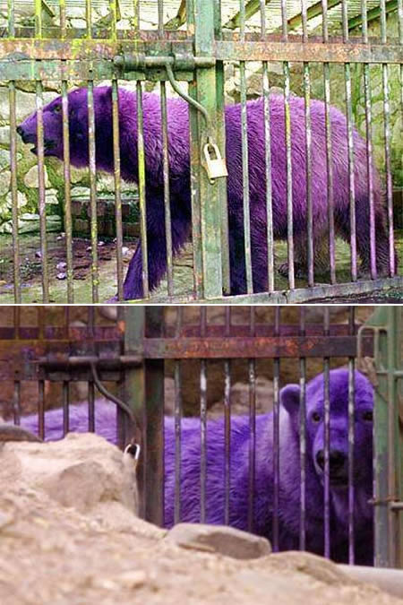 Cool Animals Pictures Unusual Colored Animals