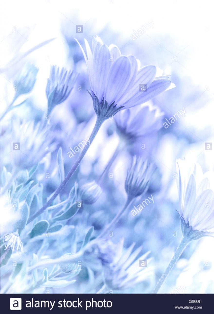 blue pastel flower flowers plant soft spring focus