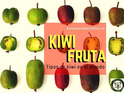 Las vareiedades de Kiwi, encontramos el Fuzzy, A.deliciosa, Actinidia arguta y Kalomikta Actinidia.