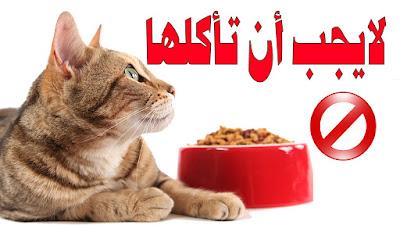 أكلات القطط الممنوعة عليها .. تعرفوا عليها حتى تتجنبوها