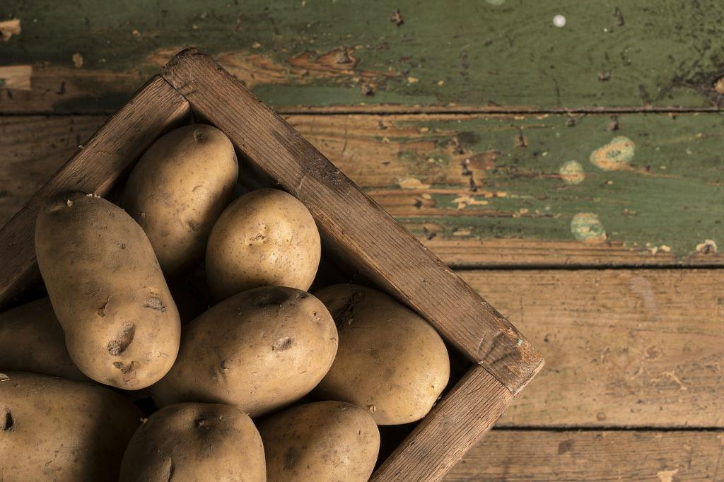 감자 보관방법