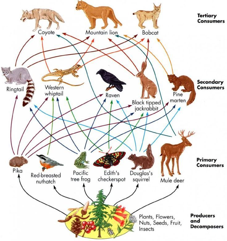 Structure And Functions Of Ecosystem ; Biotic Components