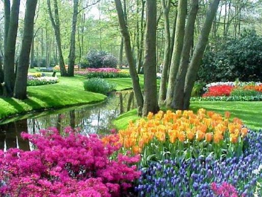 O jardim de Curió