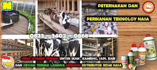 Jual Viterna Plus Nasa Di PRAMBON NGANJUK 082334020868