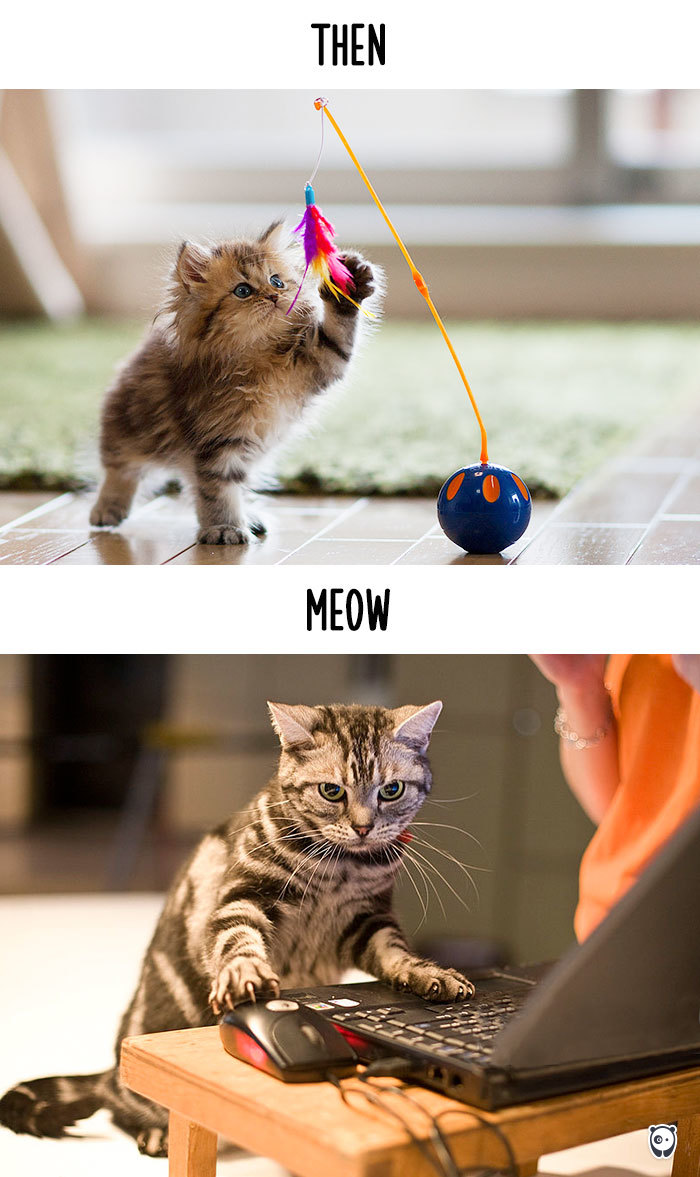 Then vs Meow How Technology Has Changed Cats' Lives (10+ Pics) - Playing
