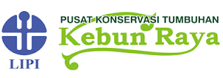 Lowongan Pusat Konservasi Tumbuhan Kebun Raya-LIPI