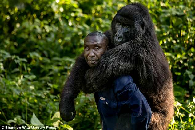 Andre then gives her a piggyback around the Virunga National Park in the Democratic Republic of the Congo.