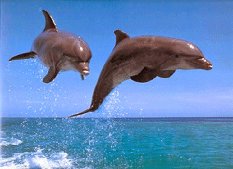 Imagen dos delfines saltando sobre el mar